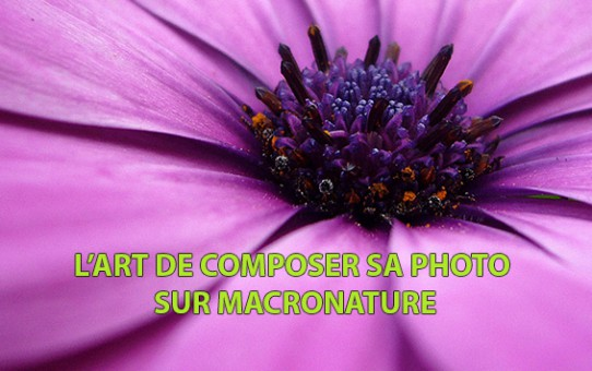 L'art de composer sa photo sur MacroNature