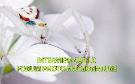 Interview sur le forum photo MacroNature