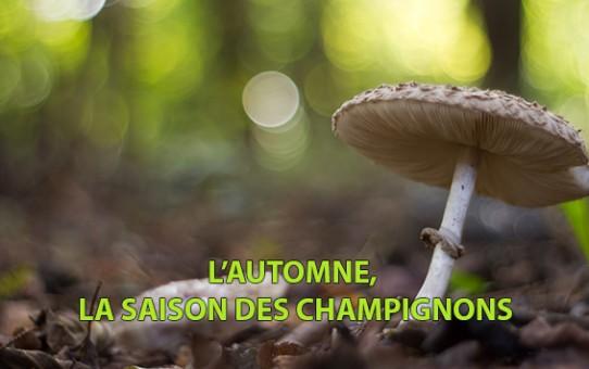 L'automne, la saison des champignons
