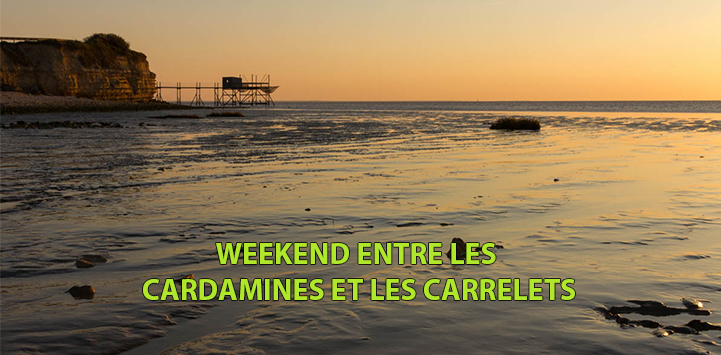 WEEKEND CARDAMINES ET CARRELES