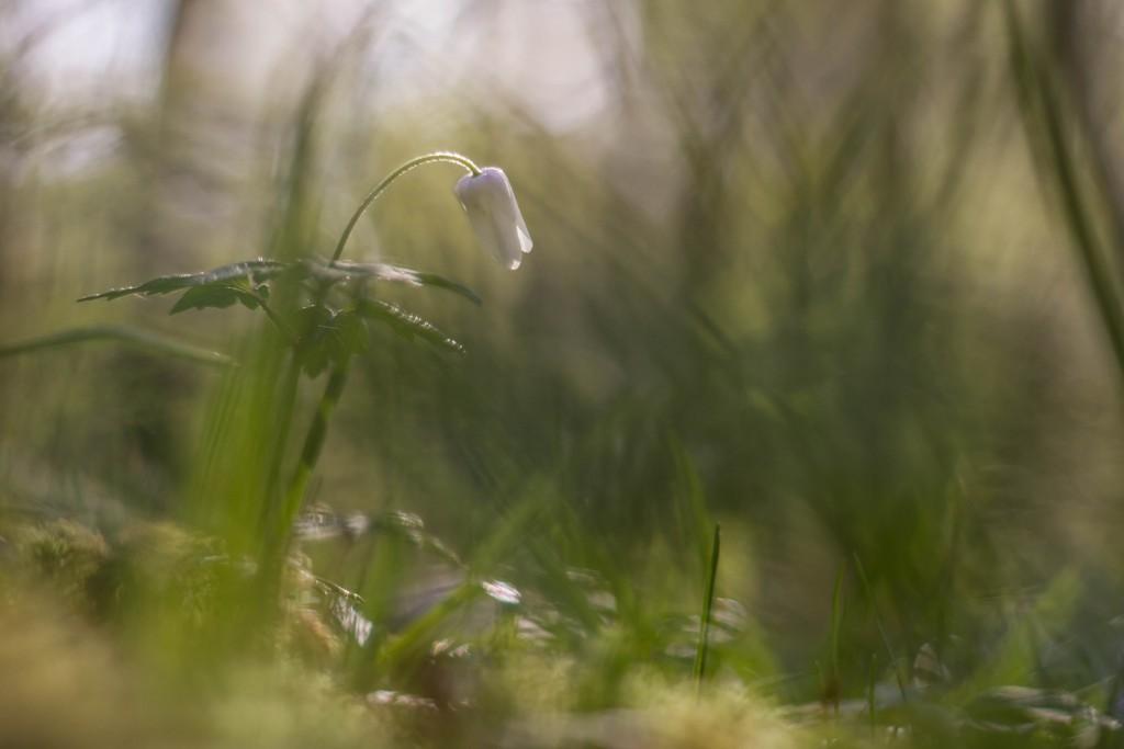 2015-04-13 La Danceuse des Bois