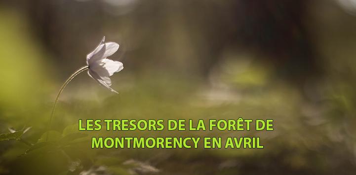 LES TRESORS DE LA FORET DE MONTMORENCY EN AVRIL
